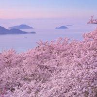 オンラインで絶景お花見気分「桜ドローンプロジェクト2021年」