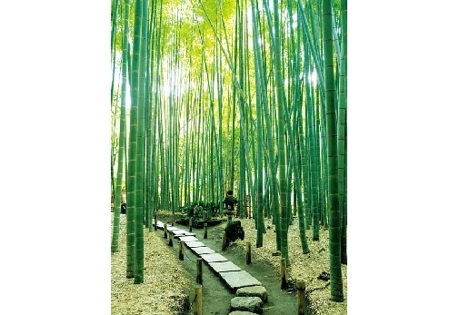 徒歩約25分→報国寺と竹林を散策