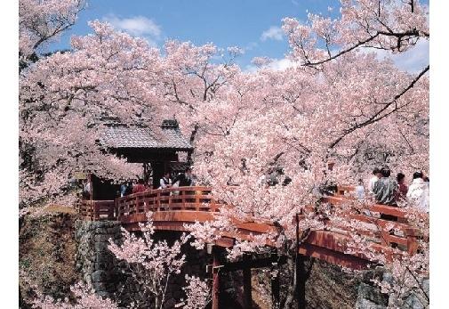2日目:天下第一の桜と称される「高遠城址公園」の桜を愛でる