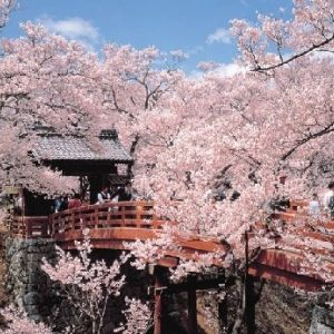 【旅色コンシェルジュが提案】春爛漫!長野の桜を気ままに楽しむ1泊2日の旅プラン