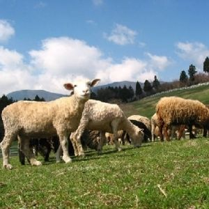 都心から近くて便利! 新鮮食材でバーベキューを楽しめる牧場