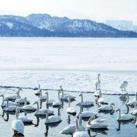 さっぽろ雪まつりだけじゃない! 極寒の冬こそ見たい北海道・幻の絶景5選