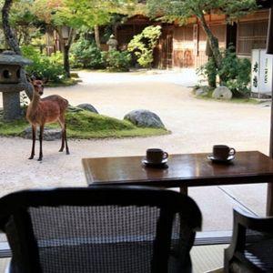 厳島神社からすぐ!紅葉谷公園内に佇む老舗旅館「みやじまの宿 岩惣」
