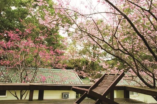 【台湾情報】幻想的な自然が魅力の宜蘭・力麗馬告生態園区。緑豊かなコテージで癒しの休日その3