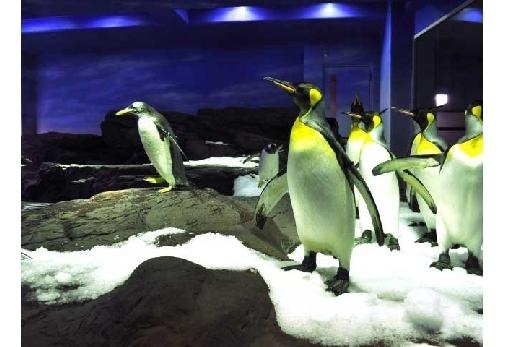 空飛ぶペンギンを間近で 水族館「しまね海洋館アクアス」