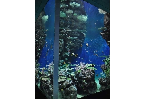 数種類のサメが一度に見られる! 水族館「しまね海洋館アクアス」