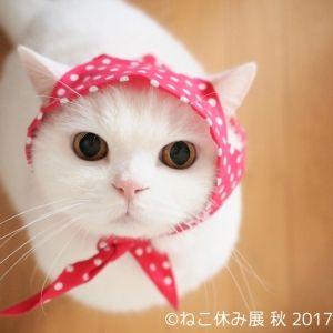 秋だって猫まみれ!名古屋で「ねこ休み展 秋」が9月29日より開催