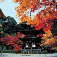 桜と一緒に紅葉が見られる!?滋賀県の国宝級スポット「西明寺」とは