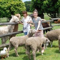 子連れのアクティビティにおすすめ!のんびりのどかな「牧場体験」