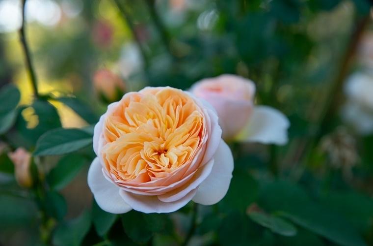 【台湾情報】見て触れて味わって……花と植物に癒される苗栗のファクトリー&パーク。その3