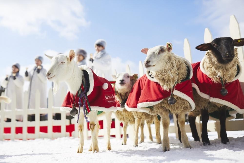 動物たちと過ごすリゾナーレトマムの「ファームクリスマス」