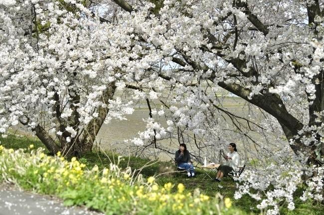 春のおでかけやお花見にぴったり