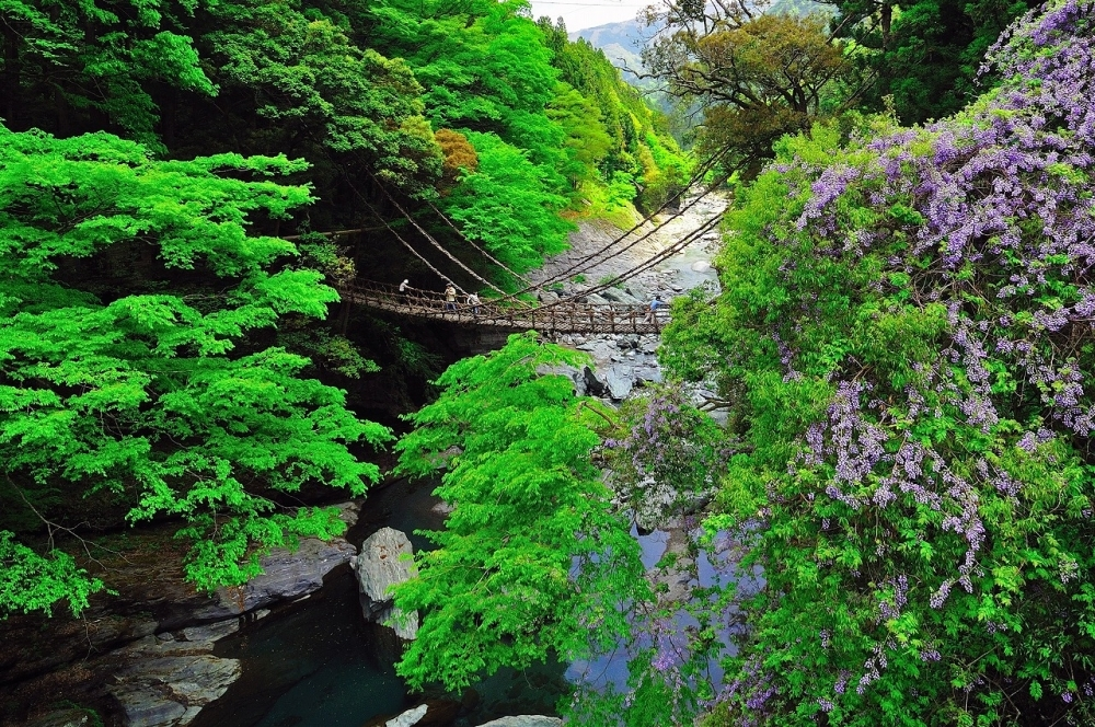 揺れまくるスリル満点な橋「かずら橋」(三好市)