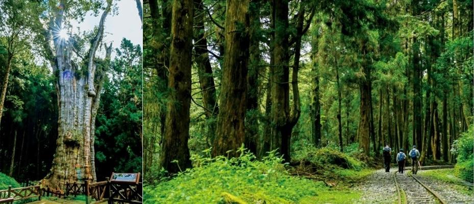 ヒノキが香る森を歩き、ご神木を仰ぐ。特別感あるハイキング。