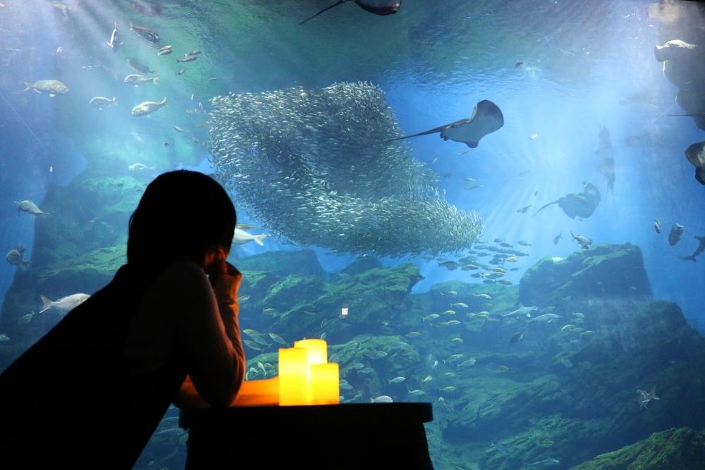 """""""ひとりぼっち""""もいいんじゃない?仙台うみの杜水族館で「おひとりさまナイト水族館」開催その4"""