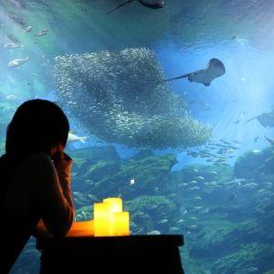 """""""ひとりぼっち""""もいいんじゃない?仙台うみの杜水族館で「おひとりさまナイト水族館」開催その0"""