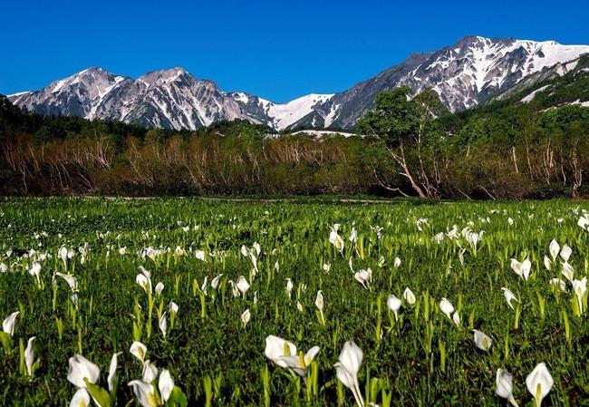 4月に訪れるのは4ヶ所。自然の中で食べるお弁当もおいしそう