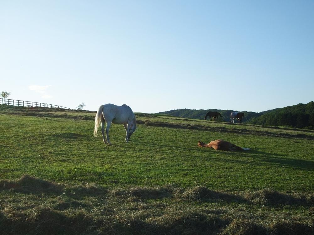 今ココ体験② サラブレッドの故郷『日高・新冠』の馬たちに癒される