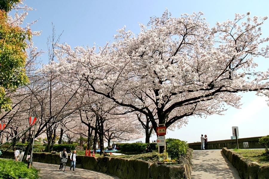 東京にある桜の名所②隅田公園