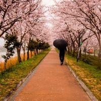 都心でのお花見デートに。東京にある有名な「桜の名所」4選