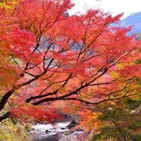 今年の紅葉狩りは絶景の「もみじロード」へ!気になる見ごろはいつ?