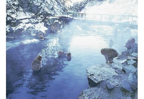 冬におすすめの長野県の観光スポット①地獄谷野猿公苑