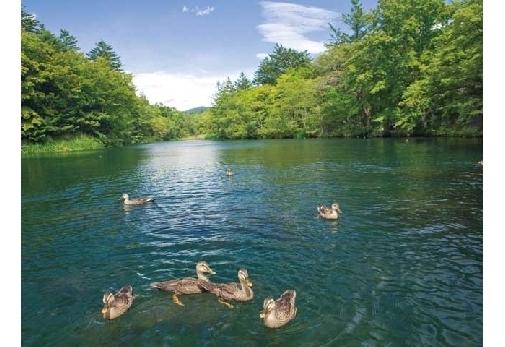 冬におすすめの長野県の観光スポット②雲場池