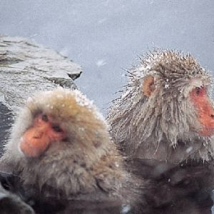 猿の入浴からイルミネーションまで。冬こそいきたい長野県の観光名所その0