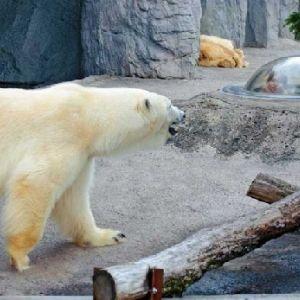 大人になっても楽しめるスポット。一度はいきたいおすすめの動物園4選その0