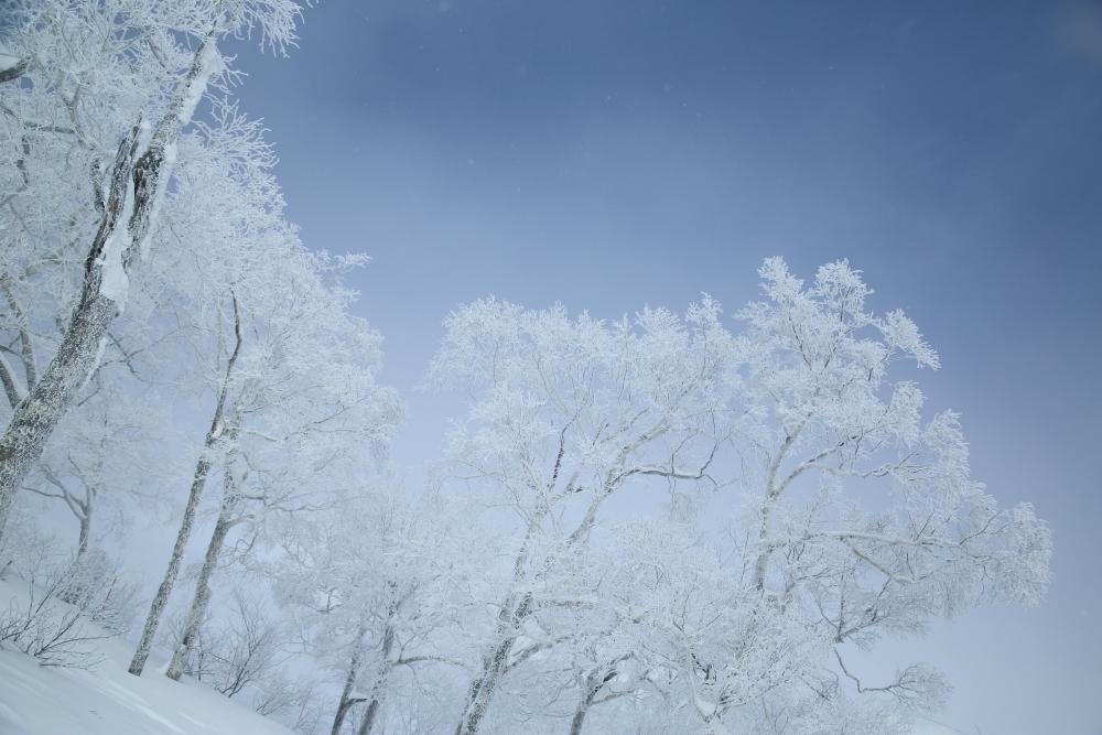 「星野リゾート トマム」で体験したいこと③ 「霧氷テラス」で絶景と出合う
