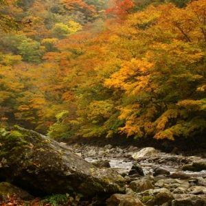 ちいさな秋を見つけにいく。旅程に入れたい紅葉スポット4選その0