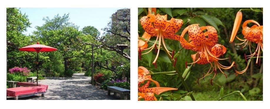 夏の花が可憐に咲き誇る、江戸っ子の花園