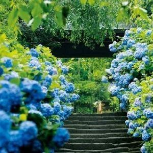 プチトリップに最適。鎌倉で見つけたGW~初夏に行きたい4つの観光スポット