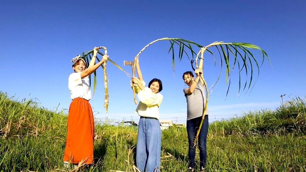 サトウキビ収穫&黒糖作りのレア体験を