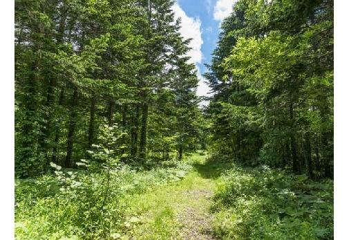 おすすめのゆる旅プラン④森林浴